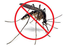 Mosquito Control in Munster
