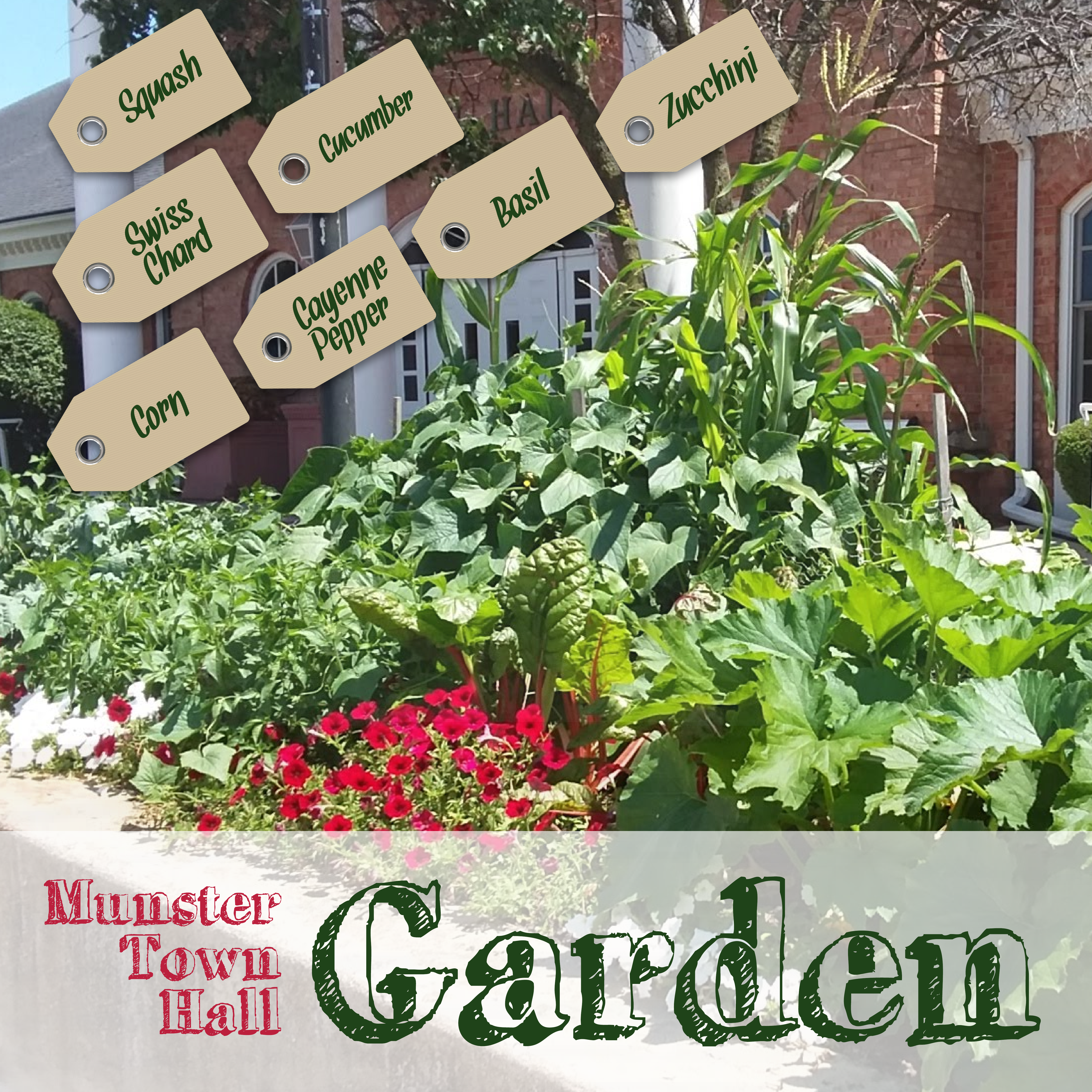 Image for news story: Town of Munster Edible Landscape Garden is ripe for the picking
