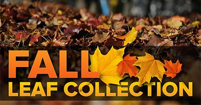 Image for news story: 2020 Fall Leaf Collection